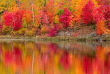 Autumn / by Sandy Rooks