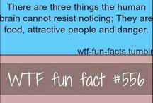 WTF Facts / by Taylor Gorton