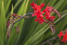 Beautiful Blooms / Flowers / by Pamela Horn