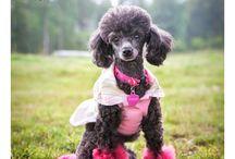 Puppies / by Carolyn Johnson