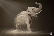 elephants / by Design Quixotic