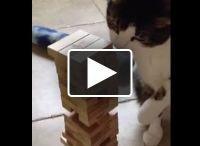 Viral Videos / by 103.7 WDBR
