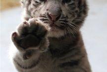 Tooo Cute.<3 / by Nisha Davis