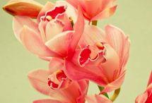 """You can build whole world around the tiniest of touches."" / by hannahjane.dakin@gmail.com hannahjane.dakin@gmail.com"