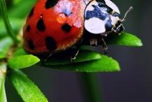Ladybugs! / by Nicole Brodeur
