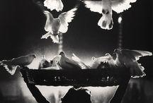 A trier 5 / by ChansLau