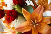 Fall Wedding Colors / by BridalSassique.com