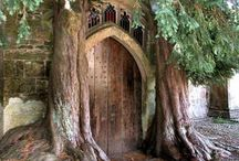 Exceptional Trees / by Vanessa Knijn