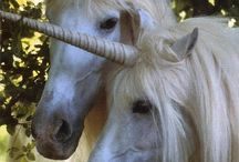 Animals-Horses-Fantasy / The equine archetype portrayed as a fantasy figure. / by Ellary Branden