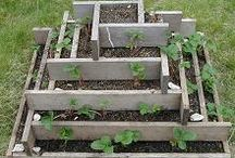 RAISED BEDS / by The Sustainable Life
