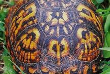 Oh! I forgot a turtle board! / In China turles carry obelisks on their backs, a symbol of strength. I also see them as a symbol for that solitary streak many of us writers have--the one that keeps pencil in hand.  / by Carolyn Howard-Johnson