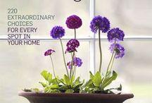 Dirt du jour -- freebies & tips / by Charlotte-Daffodil Planter- Germane