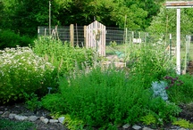 Herb Garden Know How / How to grow those herbs / by Canned Quilter