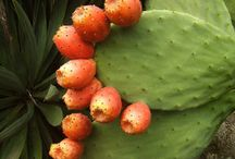 Eating Locally and Indigenously / by Prickly Pear Living History Museum