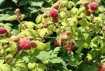 Fresh Fruits / by Home Farm Ideas