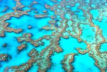 Great Barrier Reef / by Port DouglasSK