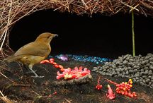 feathered friends / by GreenRobynBird