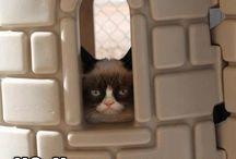 Grumpy cat  / by Monica Adams