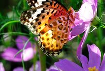 Butterflies & Hummingbirds / by Sue Clarke-Curry