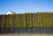 Hedges / by Angie Maffeo