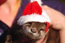 Happy Holidays! / Happy Holidays 2013 / by Heal the Bay