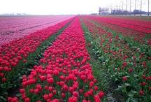Flowers / by Jme