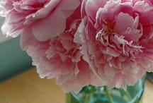 fav flowers / by Patti Lounibos