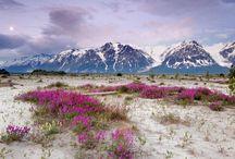 Alaska / by Becky Davis