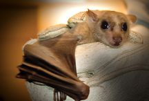 BATTY FOR YOU / by Renee Upton