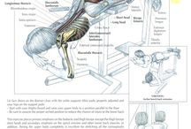 Back Exercises / by CTD Sports