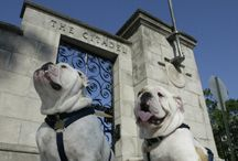 Our Mascots / by The Citadel