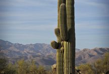 Arizona fun in the sun / Places in Arizona/crafts/jewelry/cactus varities/etc. / by Alli Bayou