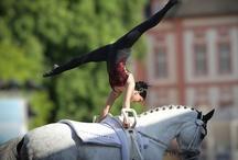 Equestrian / by Amber Megis