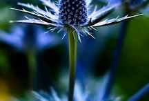 Thistle / by Elysa Casey