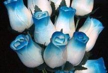 Blue Roses / by Margaret