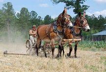 ON THE FARM!!!! / by Lynn Dawson
