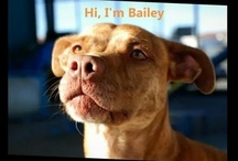 Animal Videos / by Placer SPCA