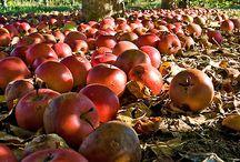 fall photos / by Marissa {RowdyRunts.Etsy.com}