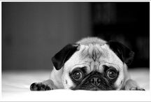 pugs and other cuties / by Faith Newman