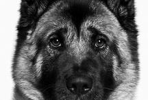 Dogs  / by Joyce Jordan
