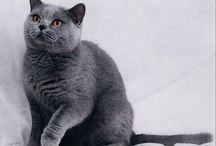 cats / by Russell Hurlburt