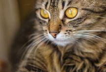 Love cats / by Puck Galenkamp