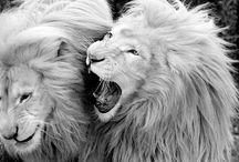 Animals / by Haddarah