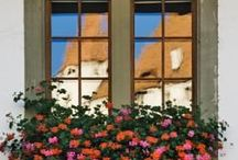Window Boxes / by Donna Baumbach