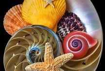conchas de mar / by Guadalupe Cornejo