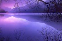 Purple / by Rachel Rose
