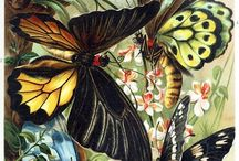 Mother Nature / Butterflies are so Beautiful / by Sandra Lenins