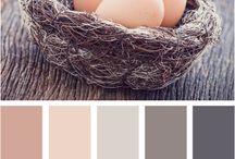 Colors / by Nancy Scott