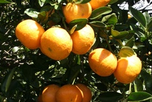 From Grove to Glass / by Florida Orange Juice