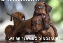 Best Doggies Ever! / by Jennifer Silva